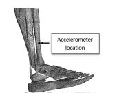 Teeter Totter : l'effet qui ferait avancer les Super Shoes 3