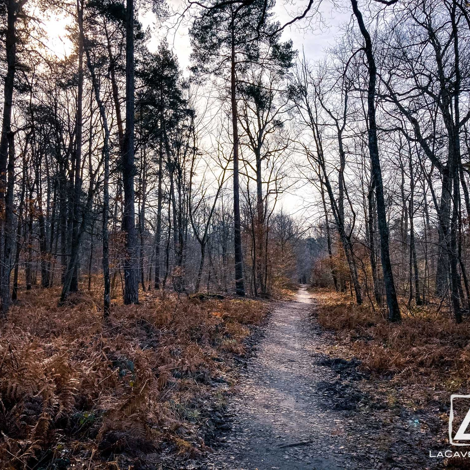 Où courir en forêt de Fontainebleau ? 69