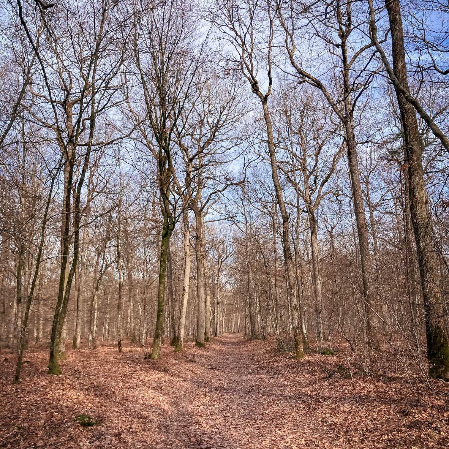 Où courir en forêt de Fontainebleau ? 70