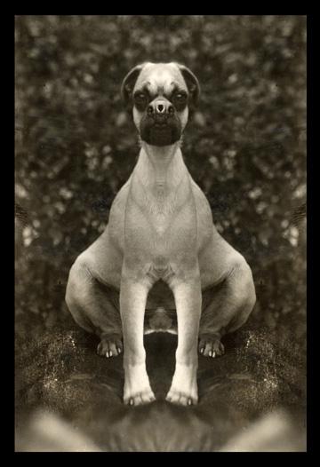 Bottom heavy pug by Mark Mothersbaugh
