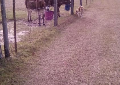 Donkey and Dog Races on the Farm