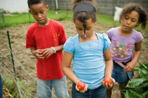 Children pick fruit from an organic vegetable garden at a childcare facility in Rand, West Virginia.
