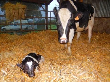 paille neuve pour Herbe et sa fille