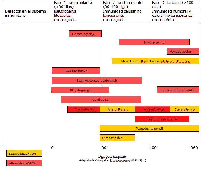 Basic Clinical Pearls: Riesgo infeccioso post trasplante de medula osea