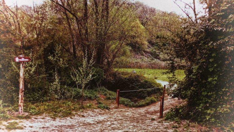 Tratto della via Francigena nella Riserva dell'Insugherata