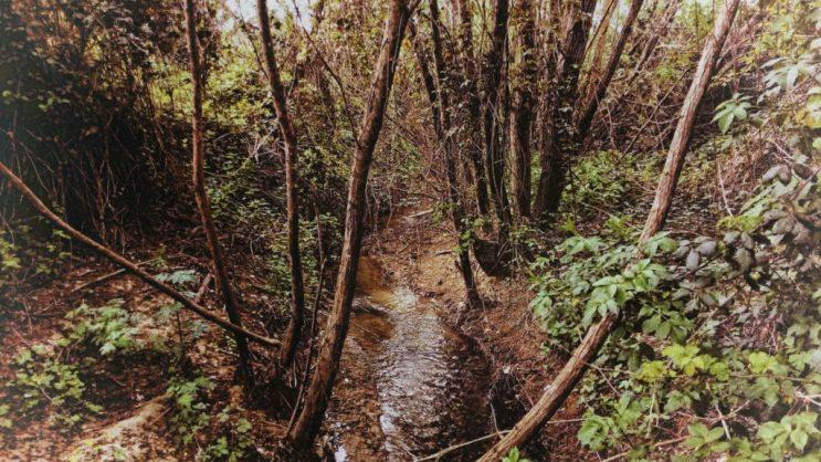Piccolo corso d'acqua nella Riserva Naturale dell'Insugherata a Roma