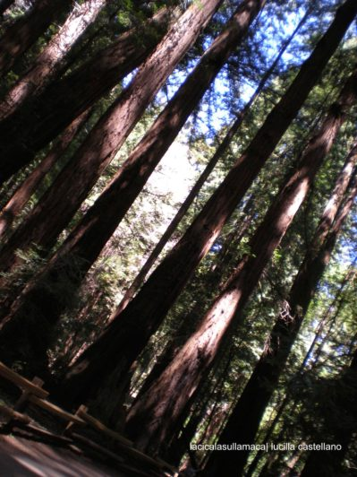 San Francisco_Muir Woods
