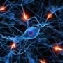 visita neurologica a Pinerolo