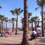 Gibraltar - Fuengirola - palmy