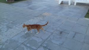 Mačky na Cypre lacne dovolenky