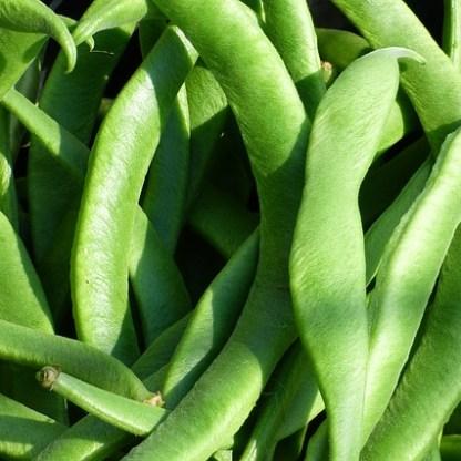 runner-beans-1073214_640