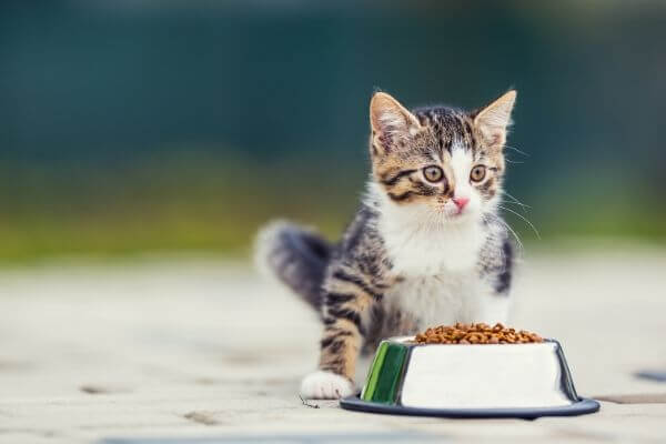 how to choose your cat food