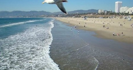 beach-bird-soaring