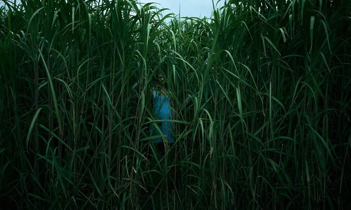 In the Tall Grass estrena su trailer
