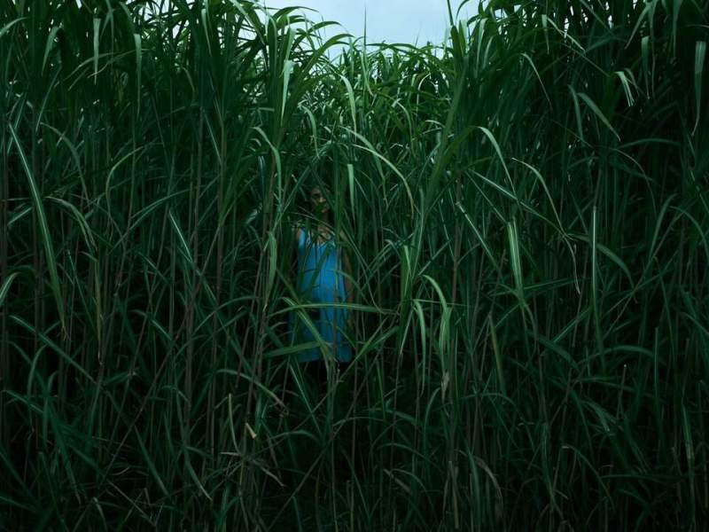 In the Tall Grass estrena su trailer