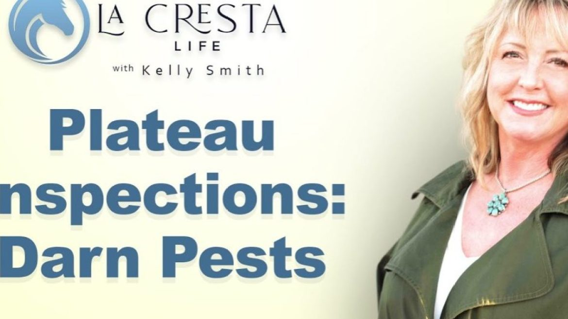 Plateau Inspections: Darn Pests