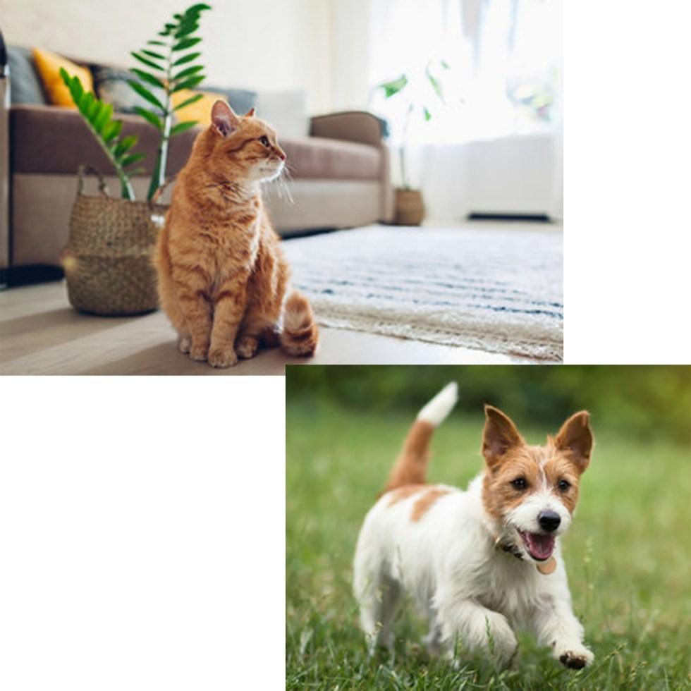 idea regalo cane e gatto