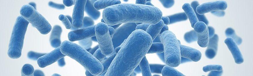 Resultado de imagen para probioticos