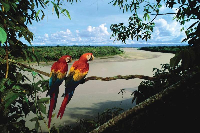 Un couple d'aras rouges dans la forêt amazonienne du Pérou. (Photo: Frans Lanting Studio / Alamo Stock Photo)