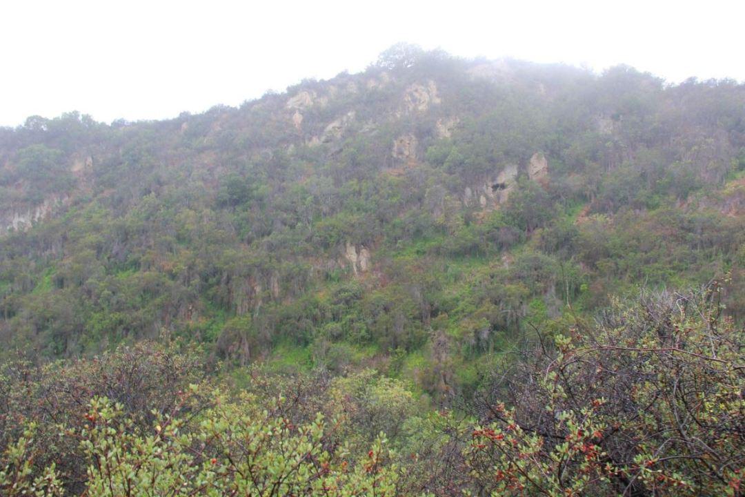 Los Liones lush greenery