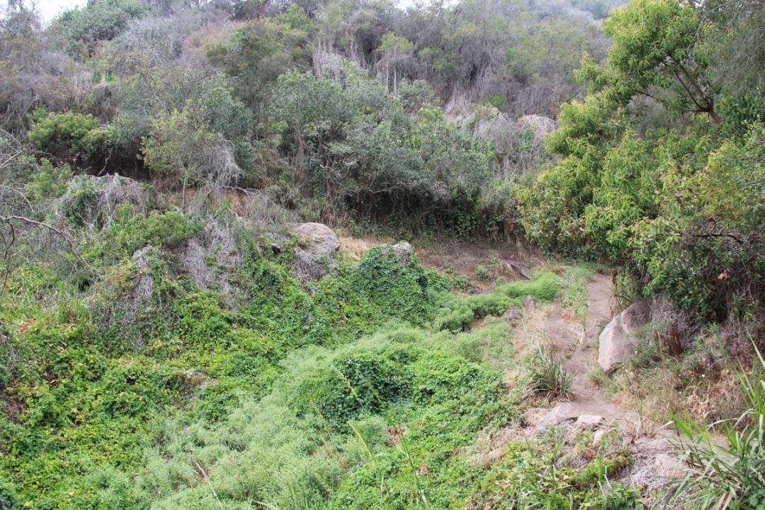 Los Liones trail