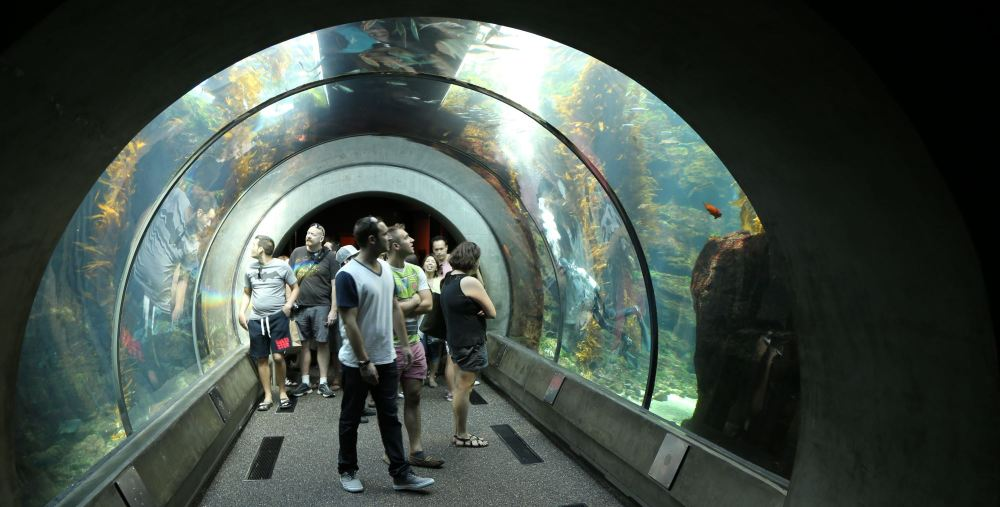 Ecosystems exhibit at the California Science Center