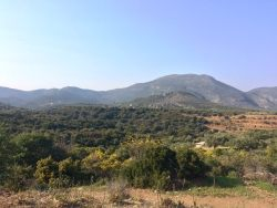 olive-groves-lakonia