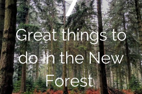 things to do new forest