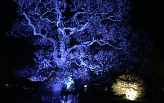 Enchanted Christmas at Westonbirt Arboretum | Ladies What Travel