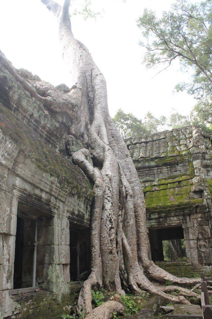 Ta Prohm Cambodia | Ladies What Travel