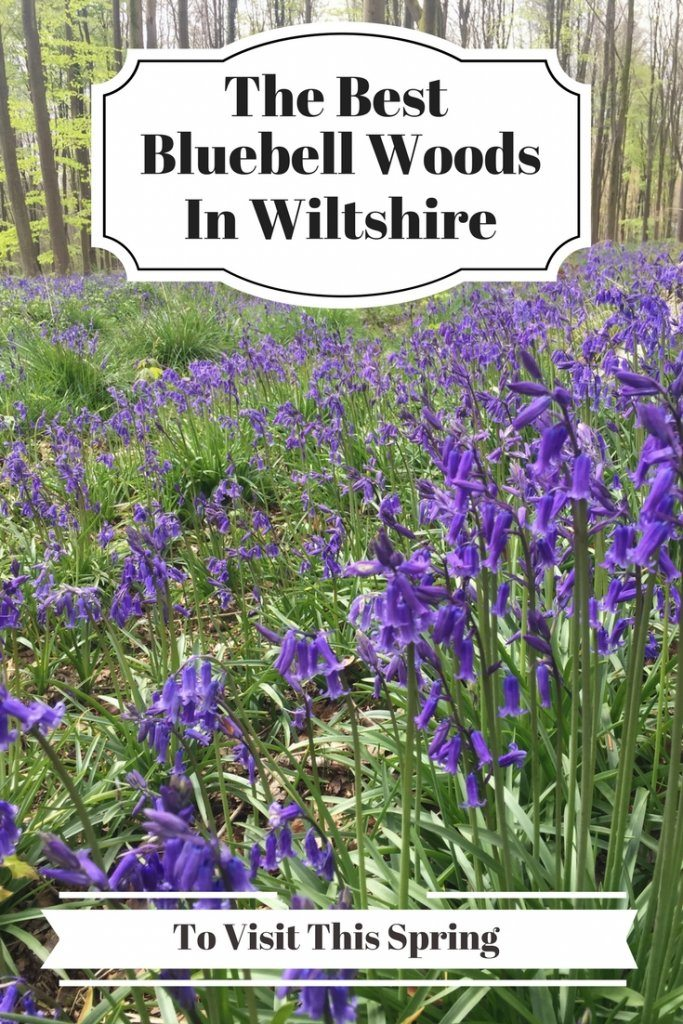 bluebell woods in wiltshire   Ladies What Travel