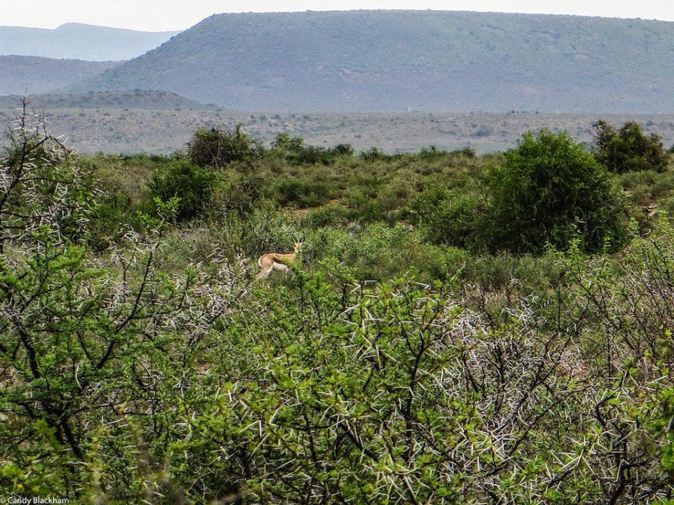 Lootsfontein Gate walk, 2-