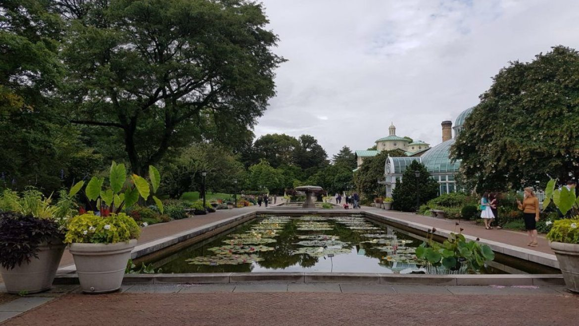 The pond at the Brooklyn Botanical Garden