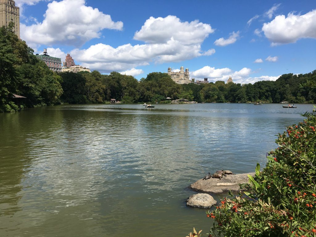 Looking across the water in Central Park