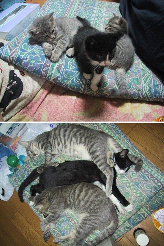 3-kitties