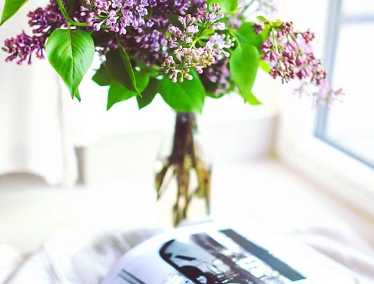 header-plant-flower-decoration-book