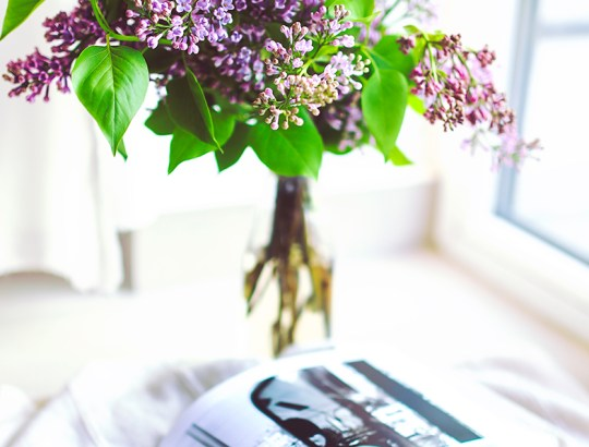 header-plant-flower-decoration-book