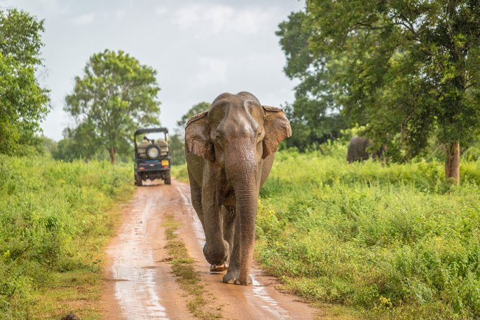 Safari in Uda Walawe National Park Sri Lanka