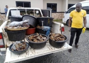 Four arrested for selling donkey meat in Edo