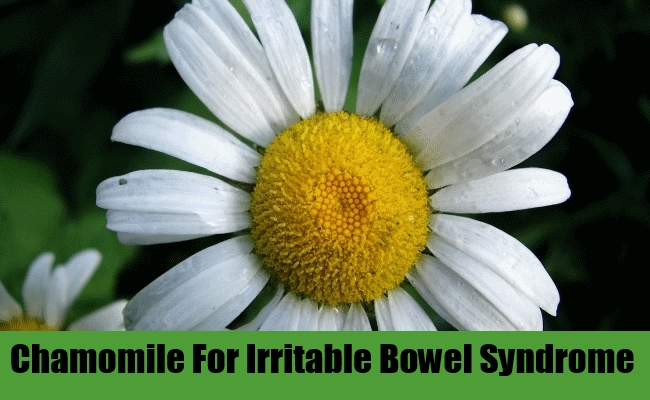 Chamomilel For Irritable Bowel Syndrome
