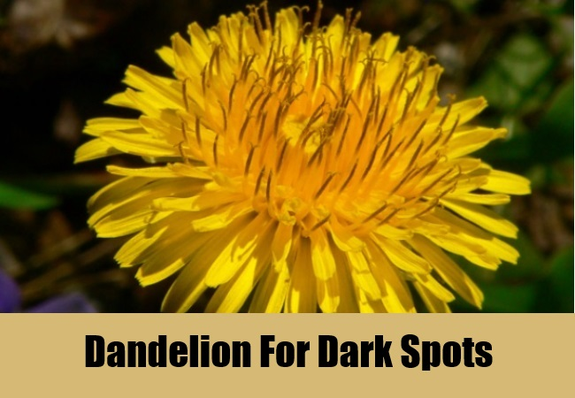 Dandelion For Dark Spots