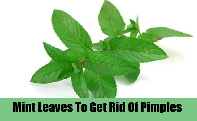 Mint Leaves To Get Rid Of Pimples