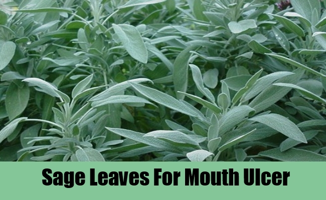 Sage Leaves For Mouth Ulcer