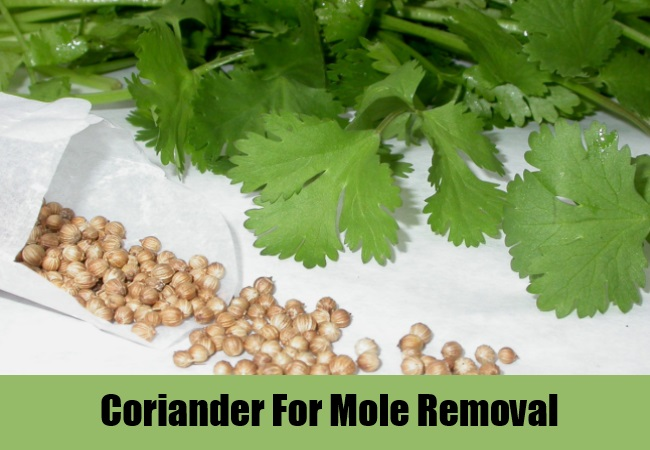 Coriander For Mole Removal
