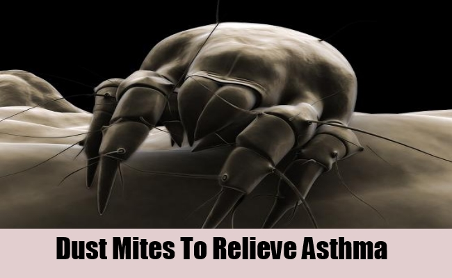 Dust Mites To Relieve Asthma