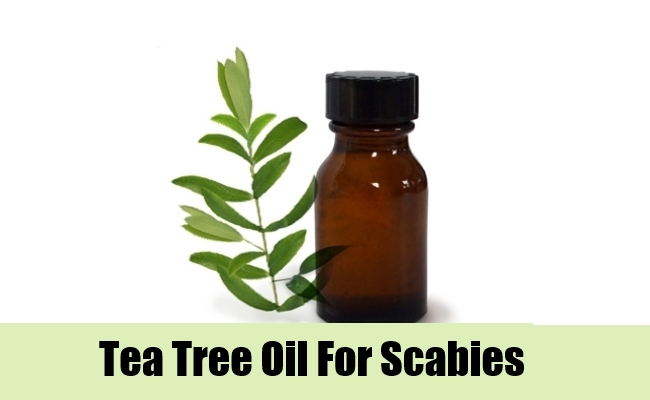Natural Remedies For Scabies Tea Tree Oil