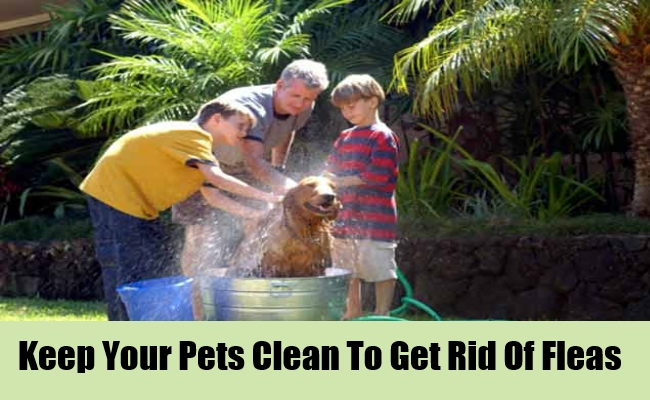 Keep Your Pets Clean