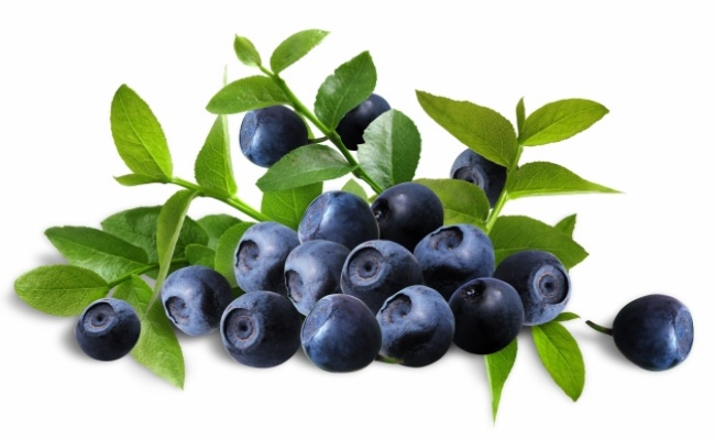Mixture Of Bilberries With Water