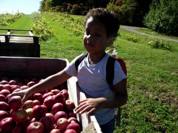 Tristan picking apples