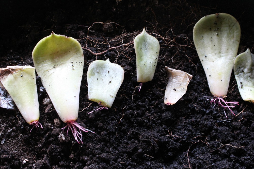 3 Things I Learned From My Failed Attempt At Propagating Succulents